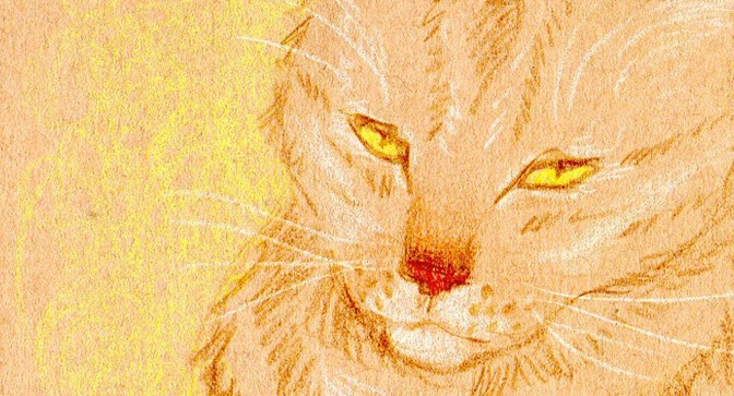Croquis de chats