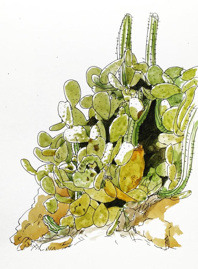 cactus-dessin-aquarelle-llanca
